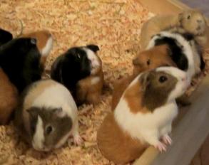 薬学部 実験 マウス