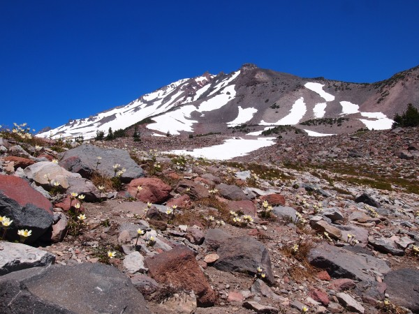 mount shasta with flowers