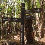熊野古道が世界遺産に登録された理由がすごかった!? 熊野古道を歩くことは修行?