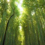 嵐山竹林の小路が美しい!京都の自然パワースポット!嵐山・渡月橋がおすすめ!