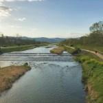【京都の鴨川】桜から「菜の花」の季節へ!京都の最強パワースポットは鴨川だよ~