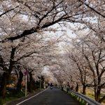 京都の桜と甘味巡り最高!奇跡が始まった・・・?