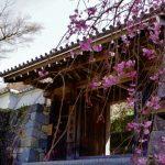 大原三千院は桜の名所?紅葉とお地蔵様、写経に・・・
