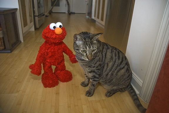 murray_elmo1
