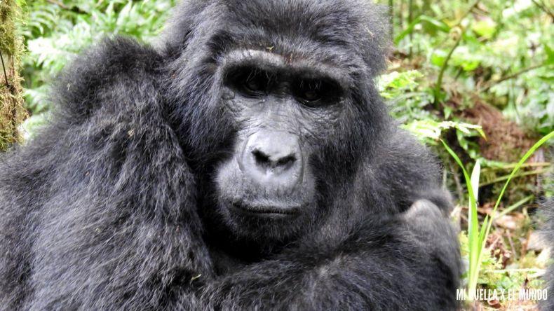 trekking gorilas (13)