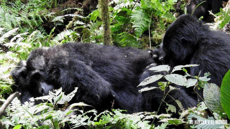 trekking gorilas (15)