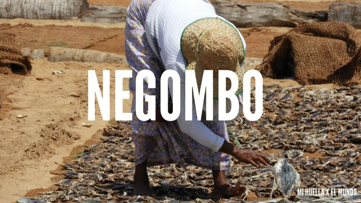 LLEGADA A SRI LANKA: QUE VER EN NEGOMBO