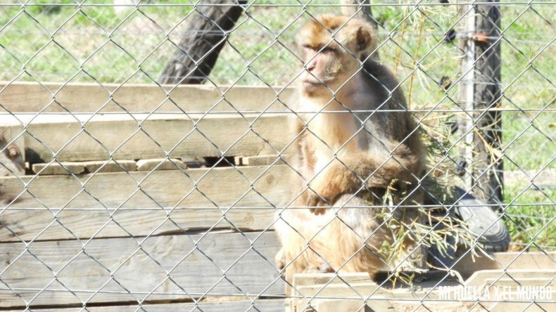 Foto de uno de los macacos de la asociación