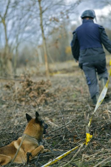 The moment of truth. The trust between the man and the dog gets tested when Alen Krijestorac takes the very first step to the mine field searched by the two dogs. He marks the meter wide safe lane with half meter wide safety areas on the both sides.