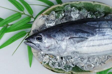 青魚とはどんな魚?種類を一覧でチェック!魚アレルギーというけど…