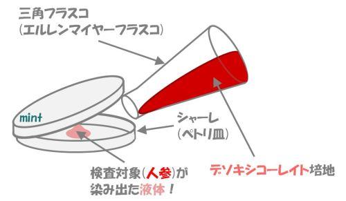 大腸菌群の検査.④