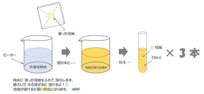 大腸菌の検査②
