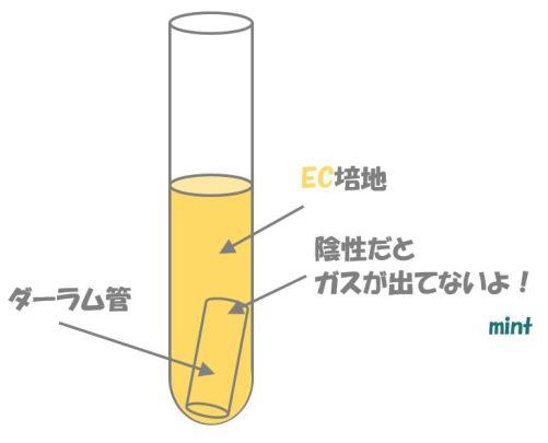 大腸菌の検査⑤