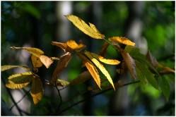 okergele-bladeren