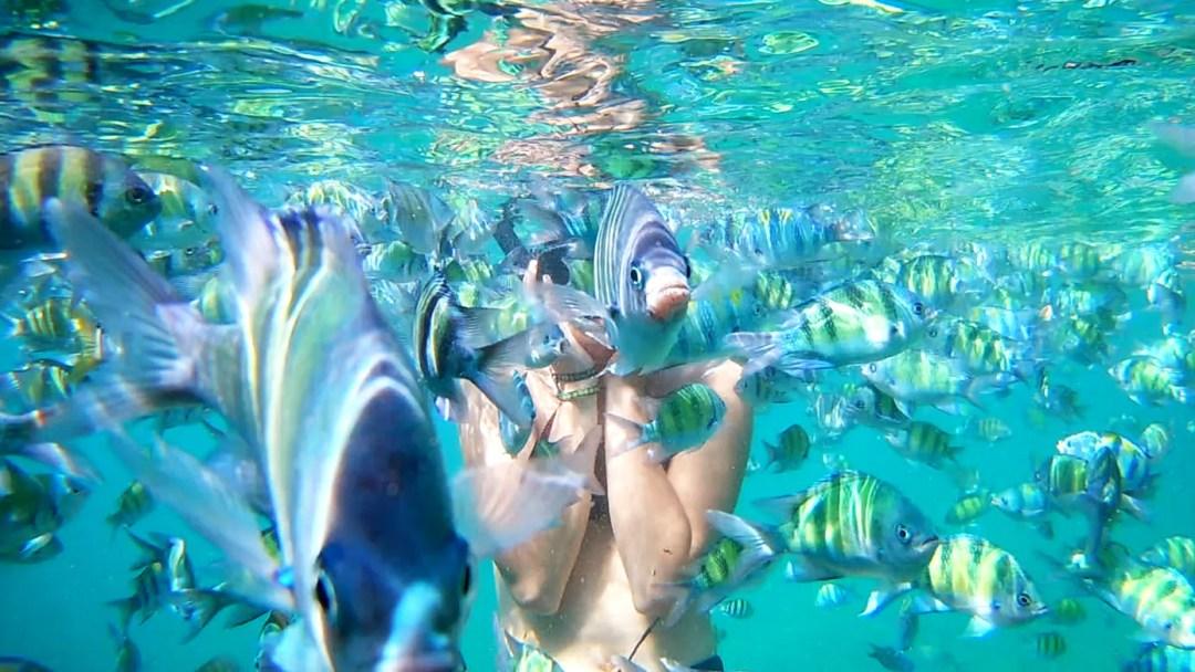 4 islands tour vissen