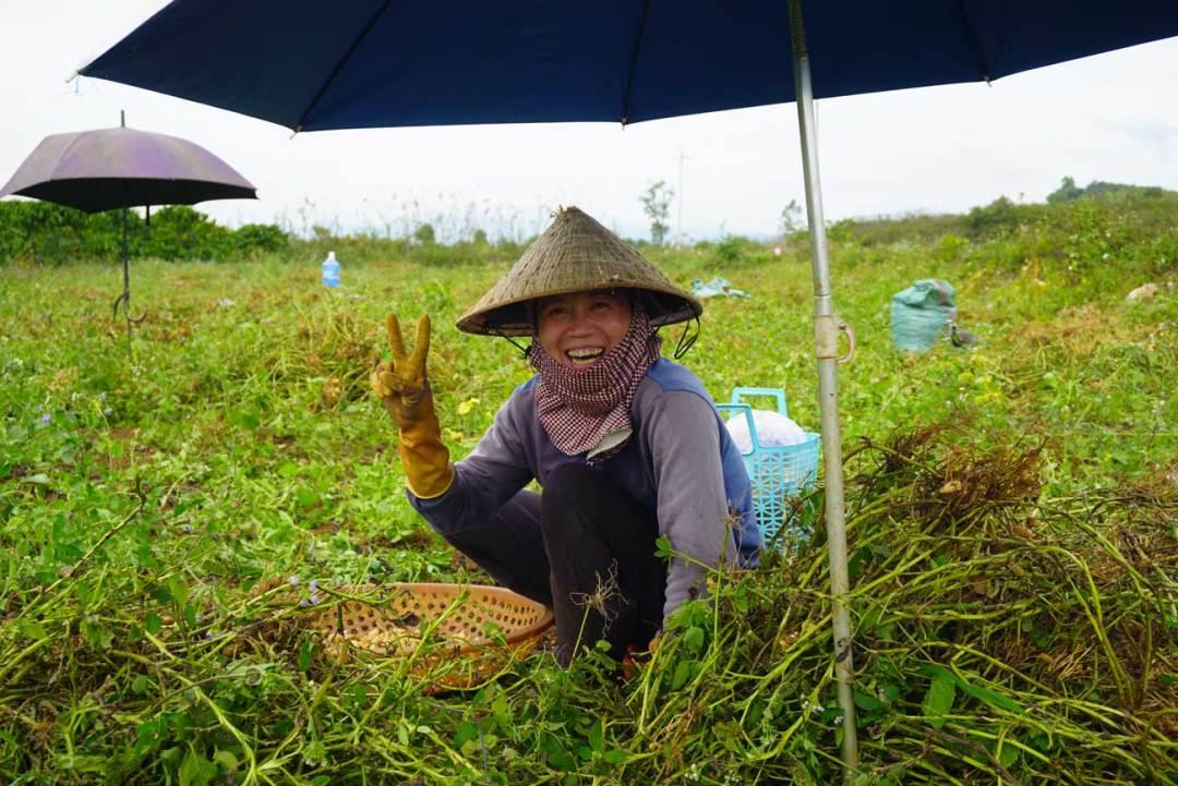 pindaplantage vietnam backpack route zuidoost-azië