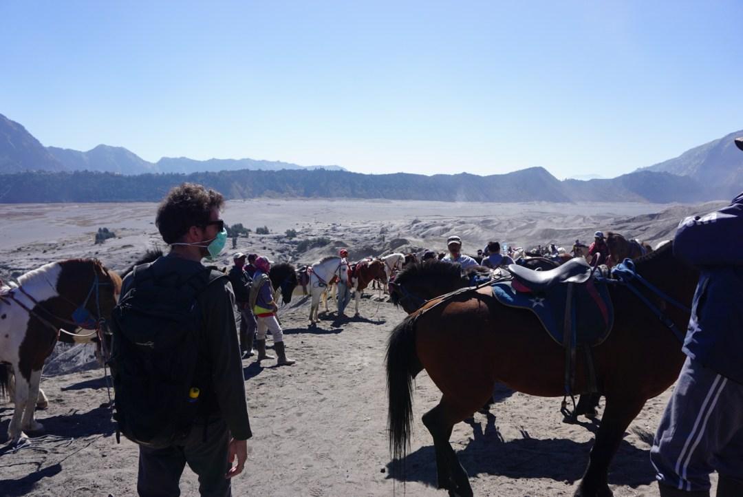 Paarden bij de Bromo vulkaan