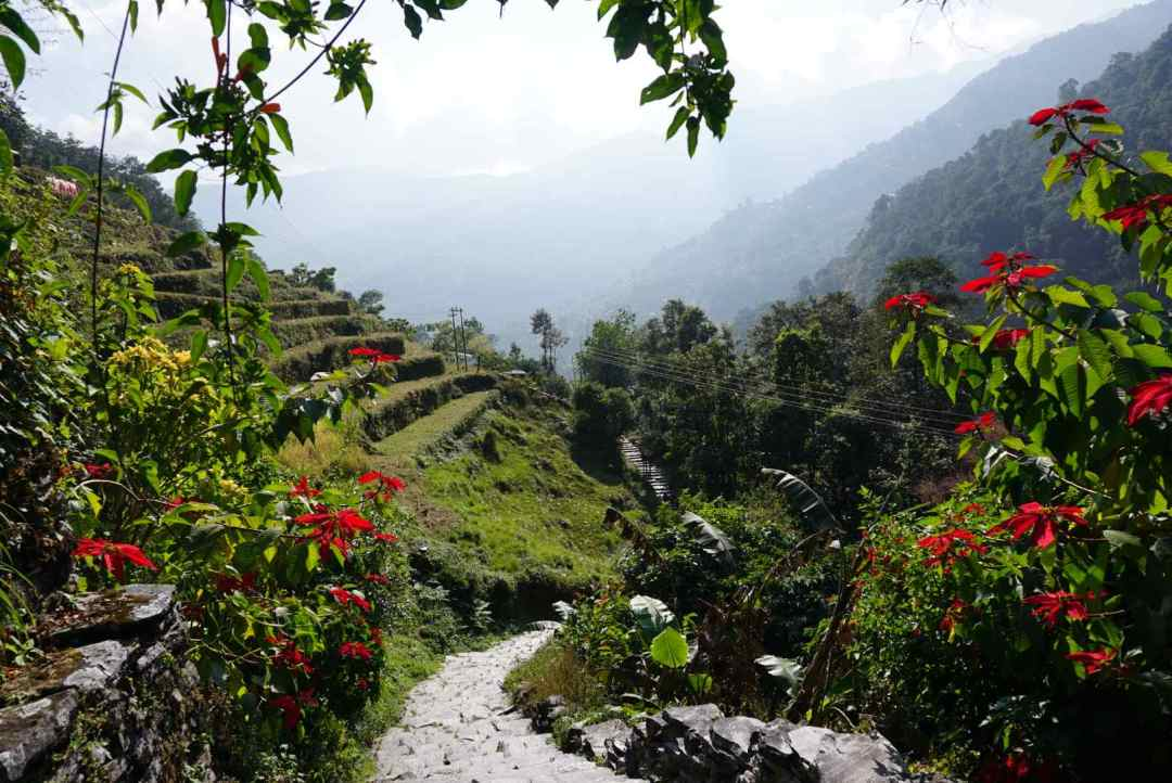 Nayapul naar Ulleri