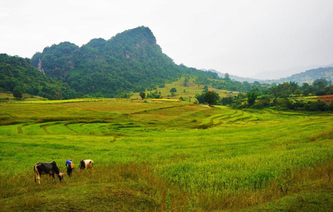 Trekking-Rijstvelden-Myanmar