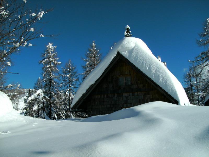 vogel, sneeuw, J. van Zoest