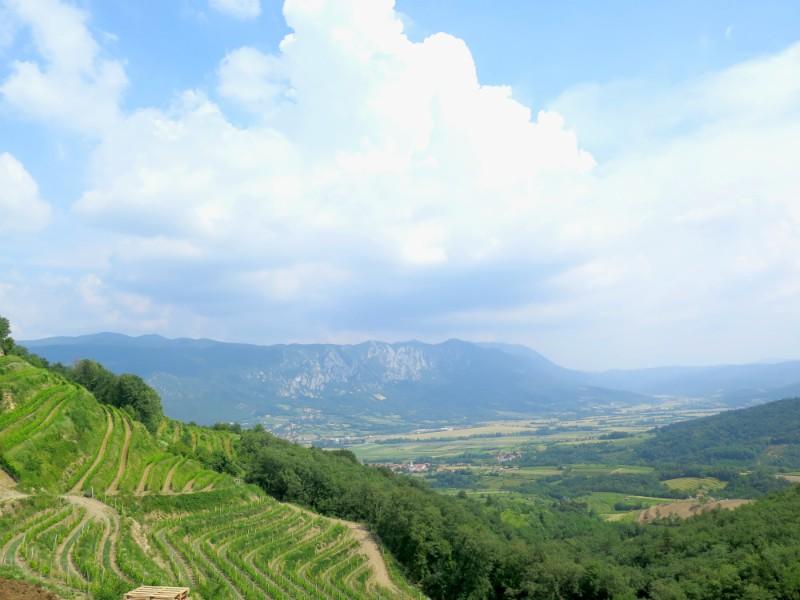 wijngaarden in Vipava vallei
