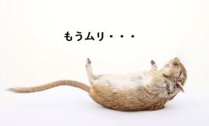ひっくり返るネズミ