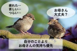 母を思う小鳥