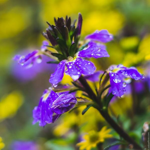 blomst-1