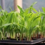 日本の農業を守るために種苗法改正への反対署名をしよう!