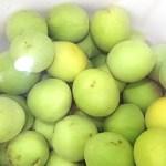簡単手作り 梅の酢漬け&梅醤油