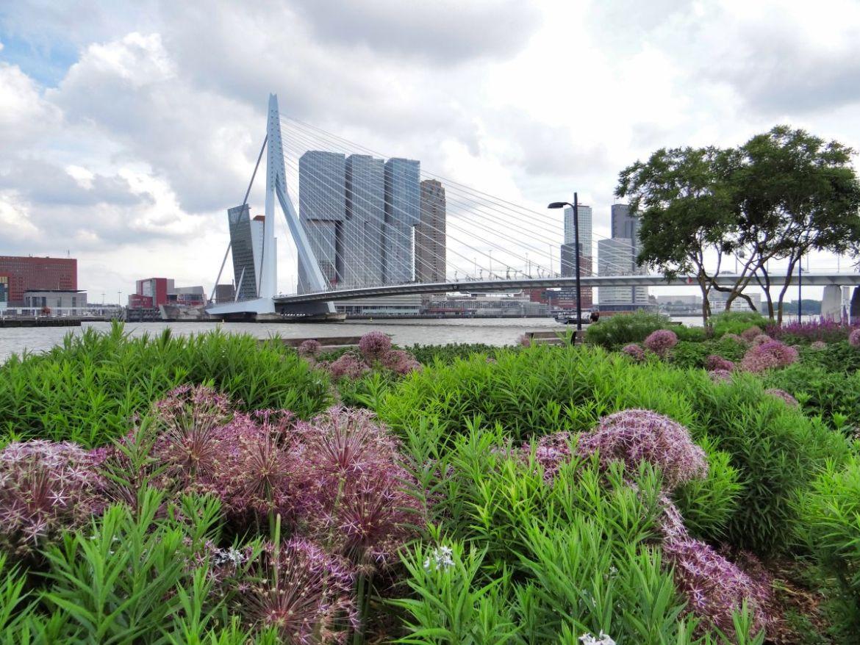 Pont Erasme Rotterdam