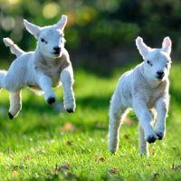 Pierwszy dzień wiosny w Irlandii i święta Brygida