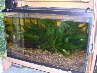 My planted aquarium