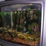 My home made TV Aquarium