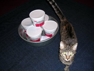 Parts to make DIY Silent Pellet Trap - plumbers putty, metal pan, and cat to tell me I am doing it wrong