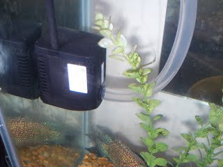 Water pump for irrigation in my fish tank