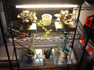 Florescent and LED grow lights