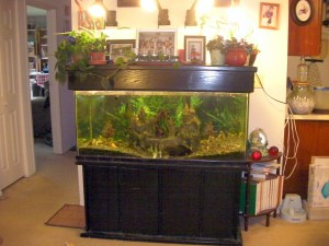 Living Room Aquaponics in an aquarium
