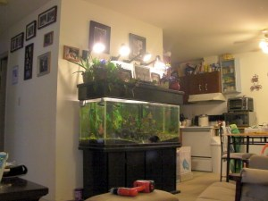 Indoor aquaponics setup on top of a fish tank