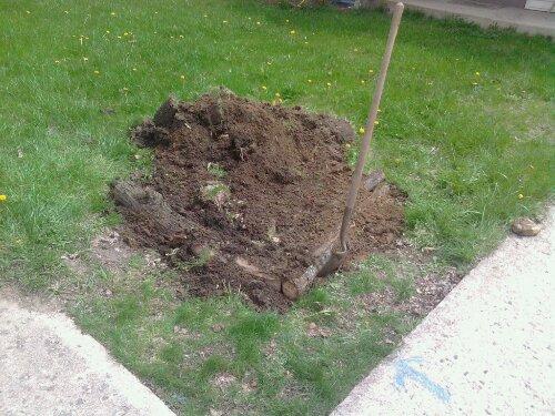 Logs buried at grade depth