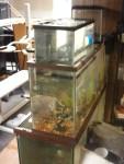 Upside down aquarium SUCCESS