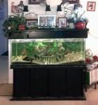 AquariPonics - Aquarium Aquaponics