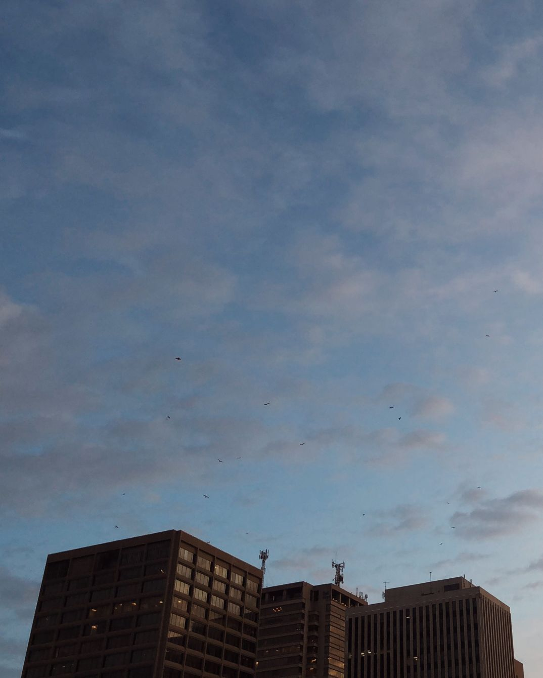 Click thumbnail to see details about photo - Birds Over City Saint John Photograph