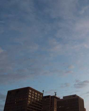 Birds Over City Saint John Photograph