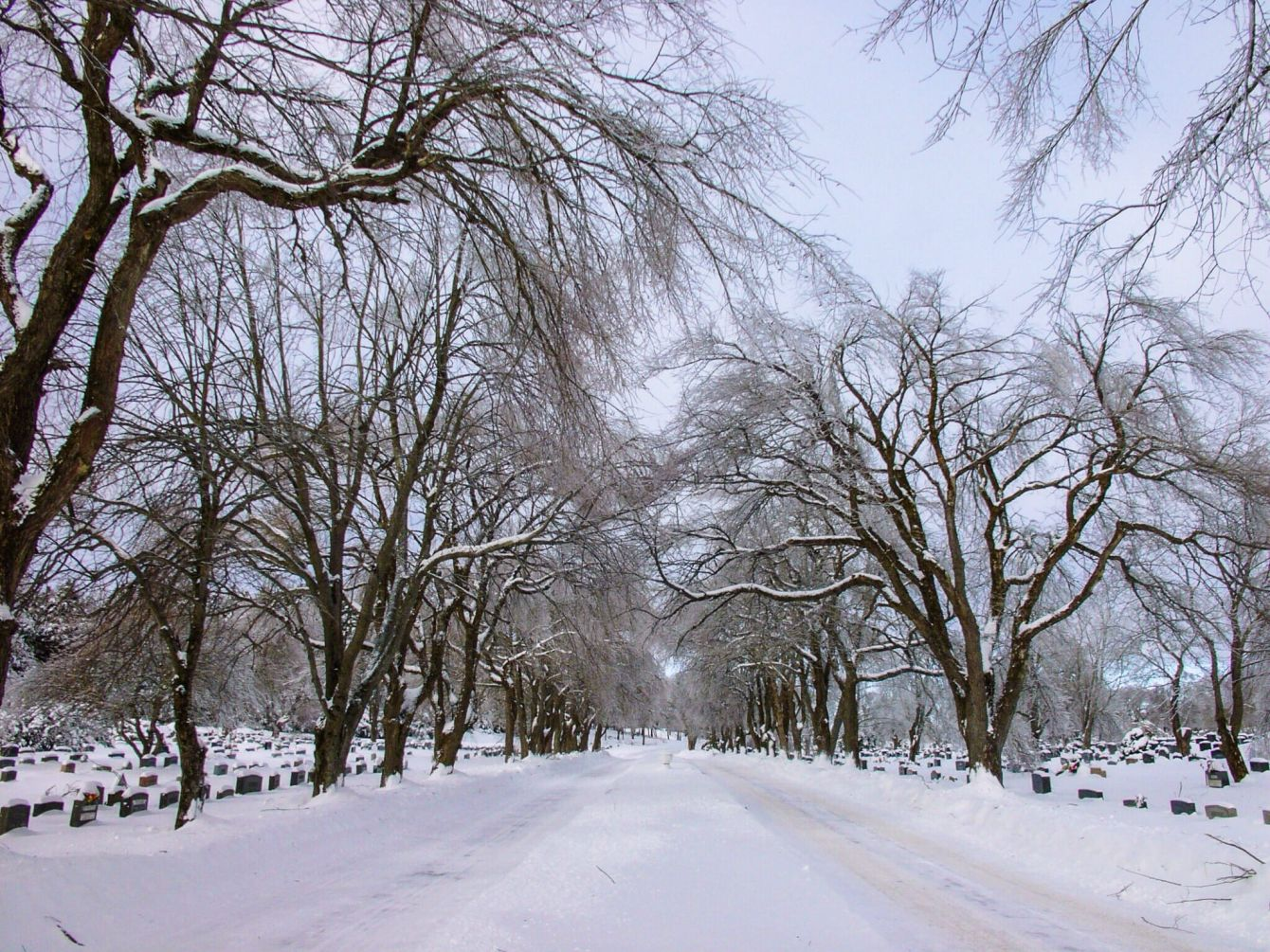 Click thumbnail to see details about photo - Winter Trees at Cemetery Saint John Photograph