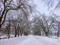 Winter Trees at Cemetery Saint John Photograph