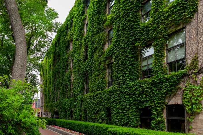 Irving Building Green Ivy Saint John Photograph