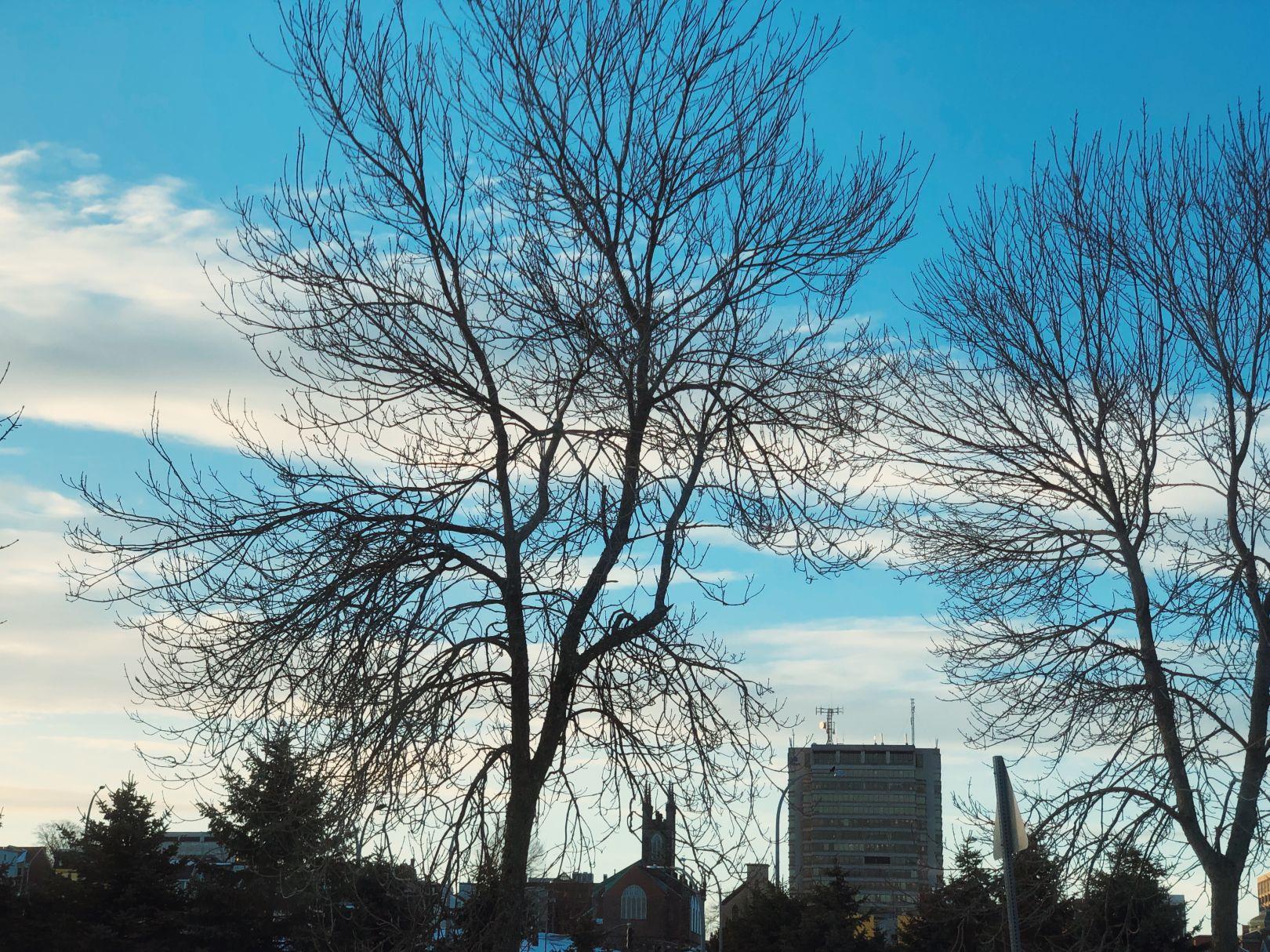 A photo of Bell Aliant Building Through Trees Saint John