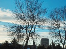Bell Aliant Building Through Trees Saint John