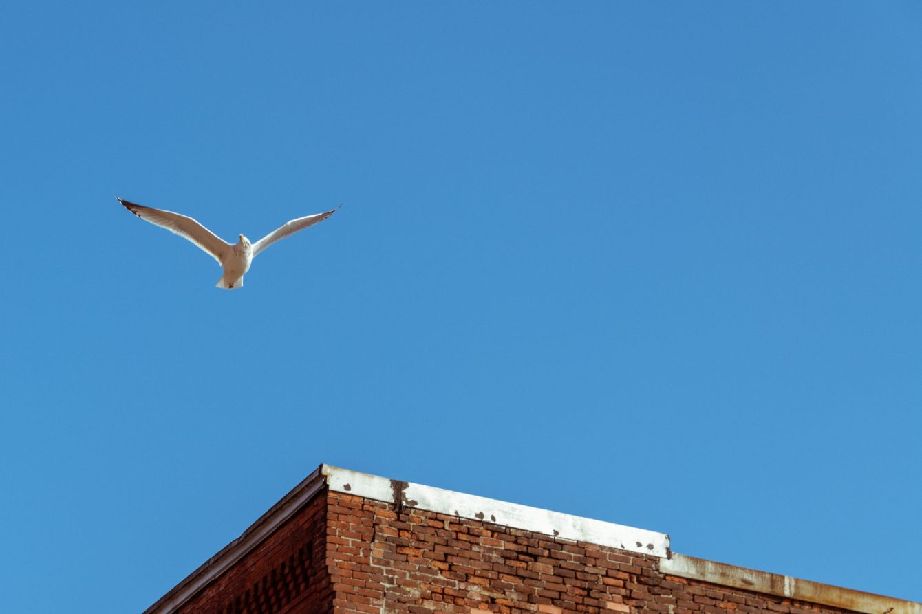 Click thumbnail to see details about photo - Bird Flying Above Saint John Architecture